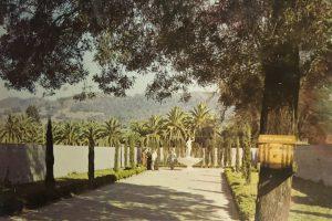 Italian Swiss Colony postcard