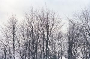 Bare branches, NH