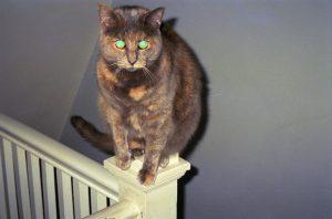 Jay & Melissa's cat Gracie