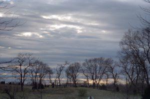 Trees and sky in VA