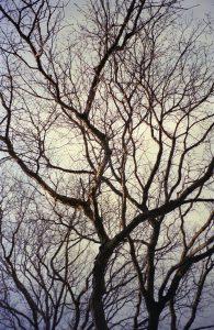 Trees at Swarthmore