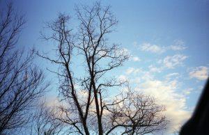 Trees in VA