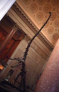 Dinosaur skeleton at Natural History Museum